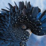 Priscilla black cockatoo portrait Ltd Ed giclee print