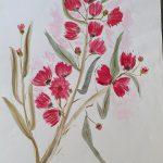 Flowering Gumnuts