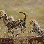 Hop Skip and Jump – Cheetah cubs