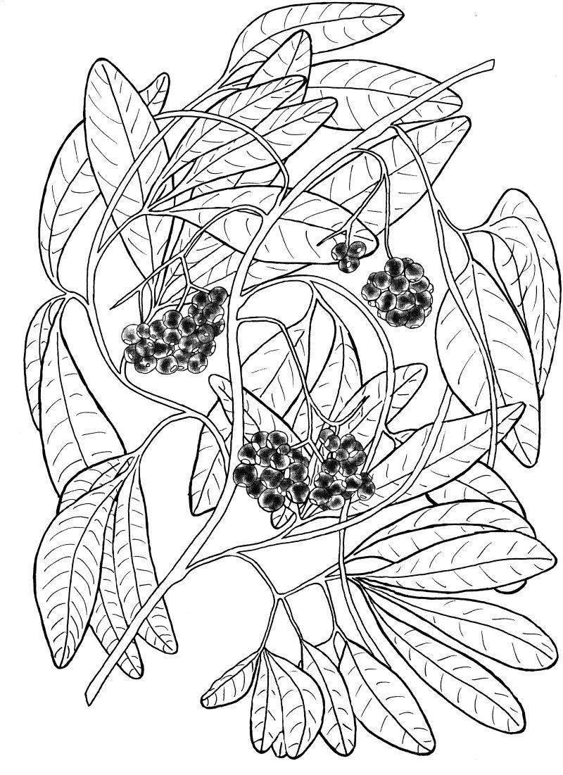 Plant 196 800x1101