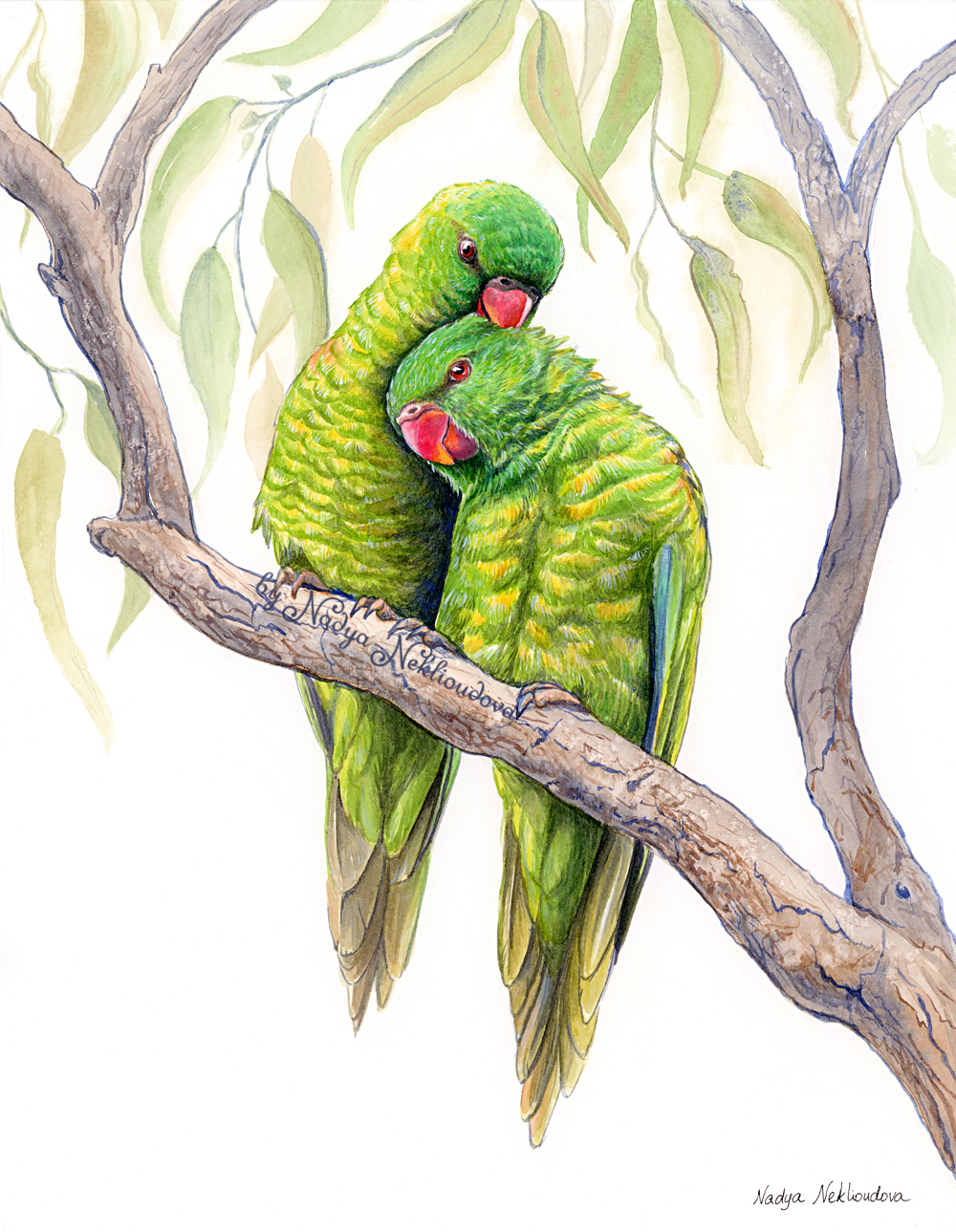 Scaly Breasted Lorikeets 1