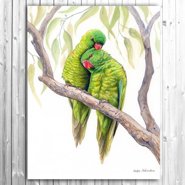 Scaly Breasted Lorikeets Canvas Grey Thumb
