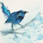 Dream of a Blue Fairy Wren