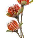 Scarlet Banksia Trio – Ltd Ed Print