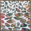 Eucalyptusinflight
