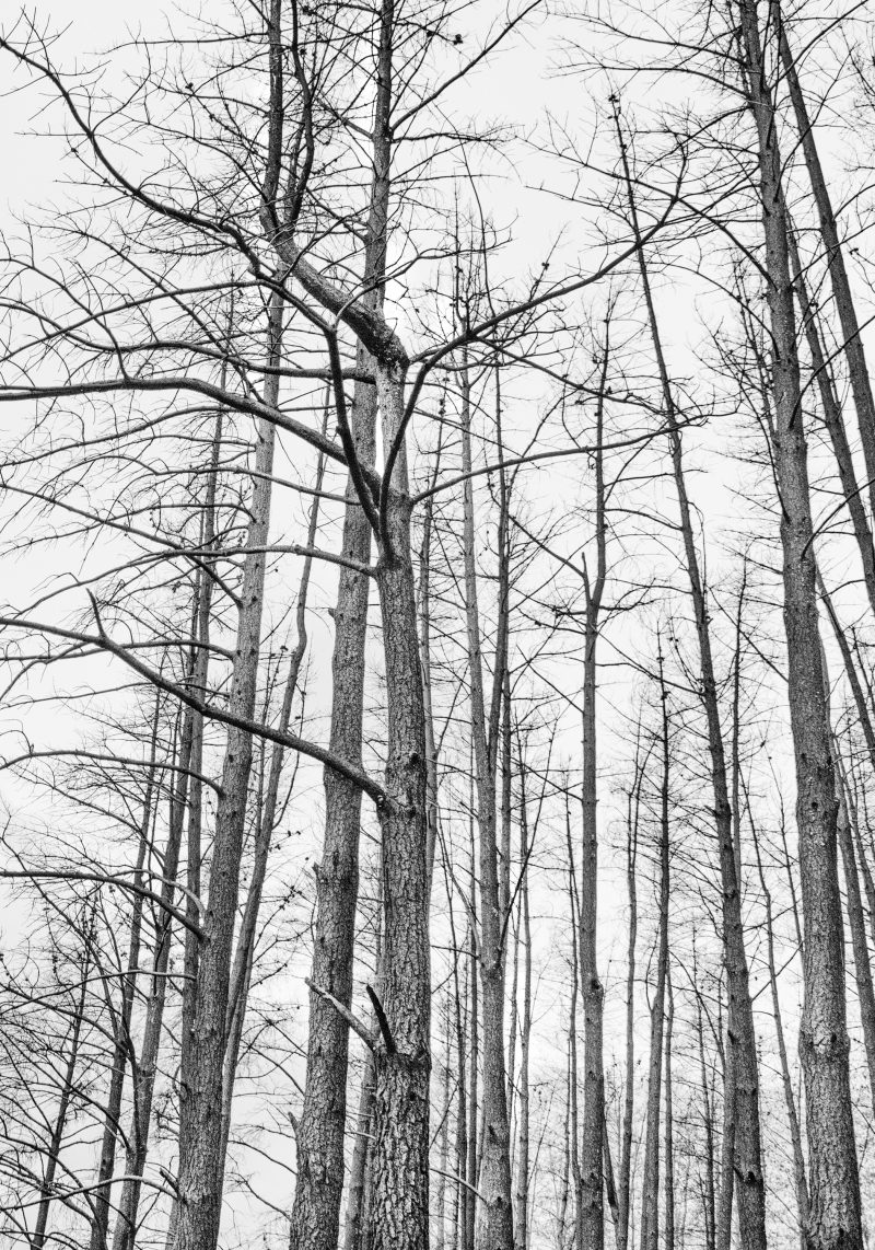Forest Fires In Black And White 800x1142