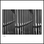 013 Organ Pipes