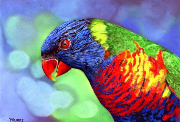 397 Rainbow Lorikeet A