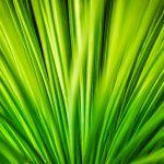 Grass Fan
