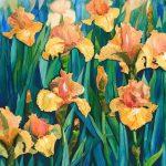 Apricot Iris Ltd Ed Print 1/100
