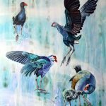 Blue Swamp Hens