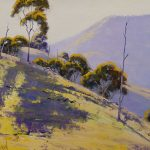 Afternoon sunlight Turon NSW