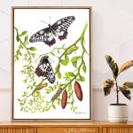 Life Cycle of a Dainty Swallowtail Butterfly – Ltd Ed Canvas Print