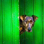 What's Behind the Green Door?