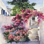 Memories of Greece Bougainvilleas