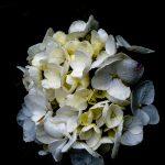 White Hydrangea on Black – Wabi-Sabi – Ltd Ed Print