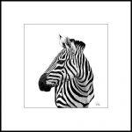 Zebra, Ltd Ed Print