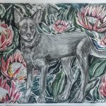Kelpie with Proteas