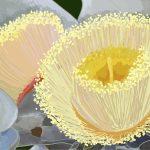 Yellow Blossom Ltd Ed Print 2/100