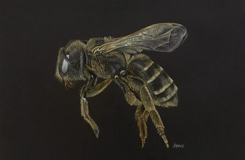 Bee End 800x523