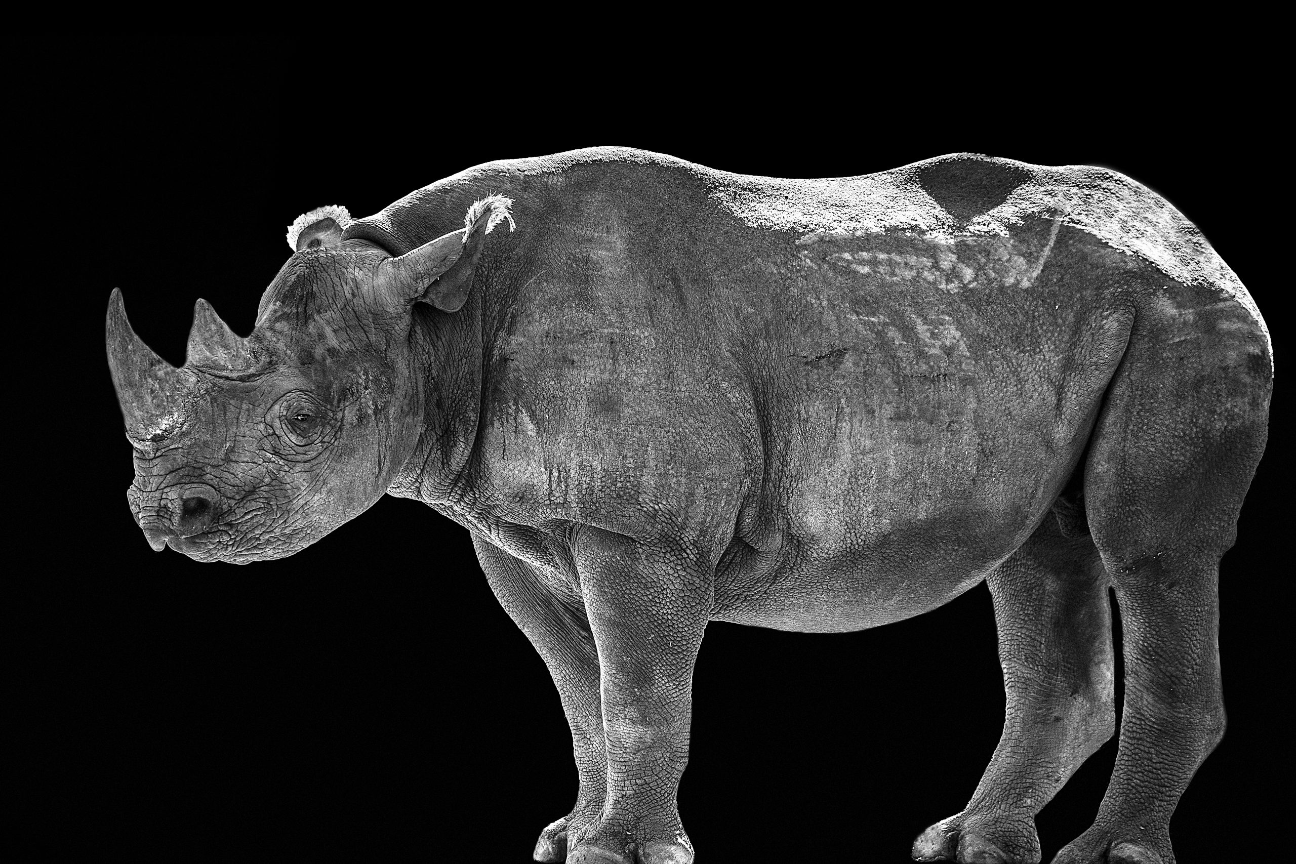 Rhino2690abcdef