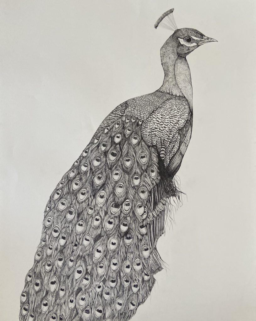 Sharon Grima Artist Peacock