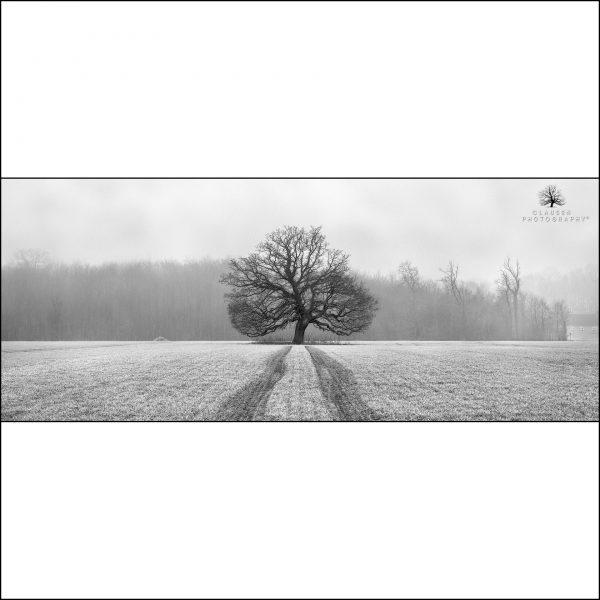 Tree Of Life Sq