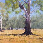 Billabong Gum Tree