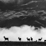 Deers in the clouds
