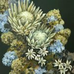 Flannel Flowers, Proteas and Hydrangeas