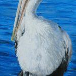 Captain Pelican