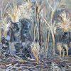 Kangaroo Island After The Fire