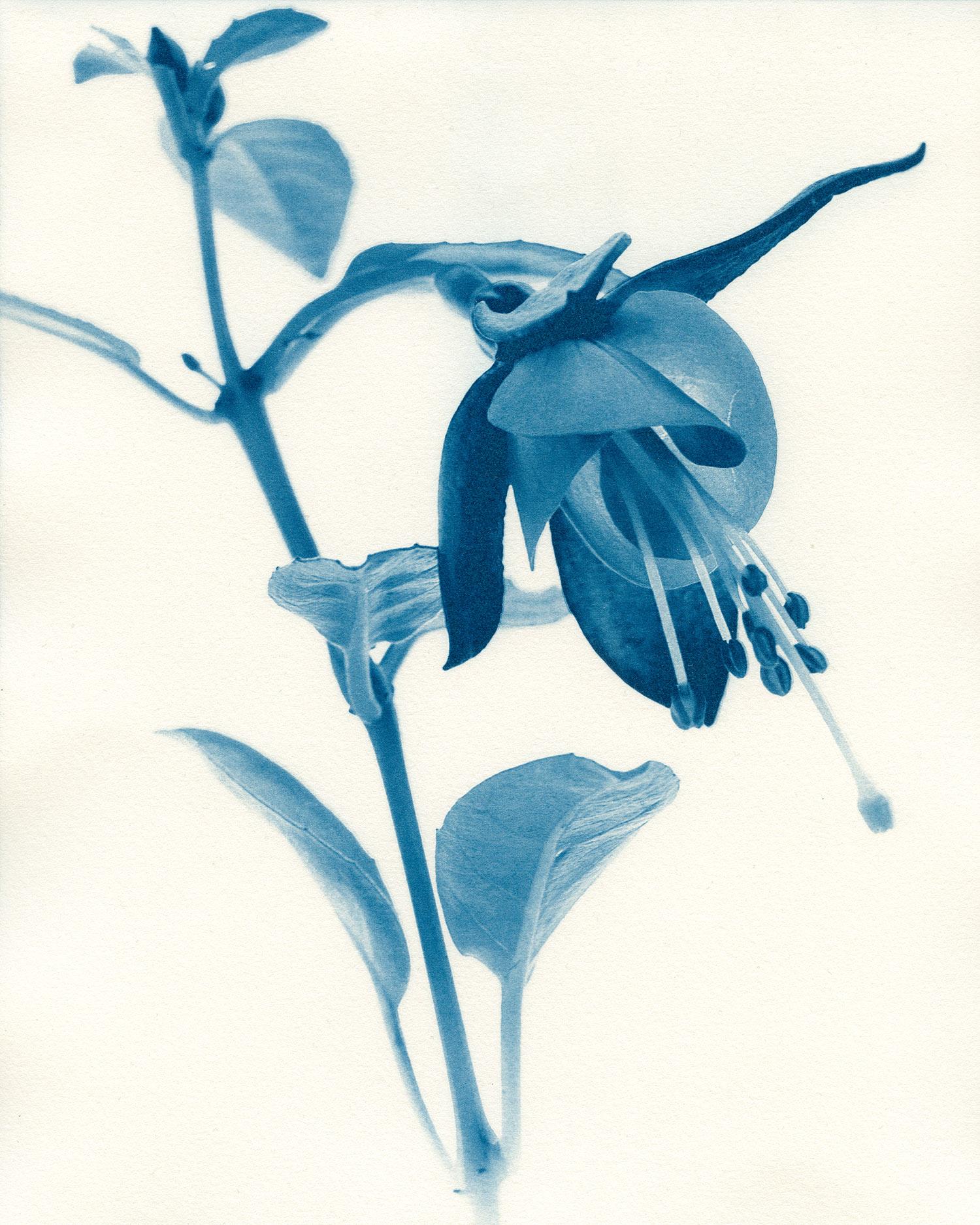 05 Fuchsia