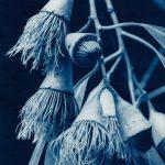 Mugga Ironbark – Eucalyptus Sideroxylon – Australian Native