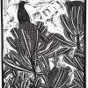 Bird On A Banksia Nicola Cowie Full