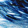 Blue Fish Close 2