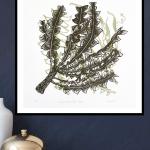 Fallen Branches – Moss
