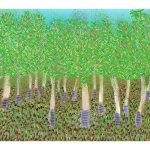 Mangrove Trees Ltd Ed Print