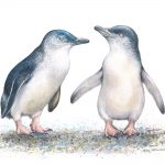 I Caught a Fish This Big – Fairy Penguins – Ltd Ed Canvas Print