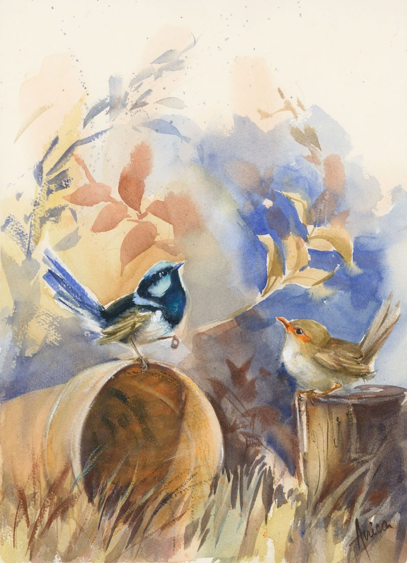 Superb Wrens And Terracotta Pot Bird Paintings For Sale Art Lovers Australia