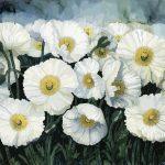Oriental white poppies Ltd Ed Print