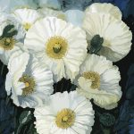 White Poppies No 2