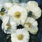 White Poppies No 2