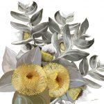 Yellow Gum Blossom Ltd Ed Print