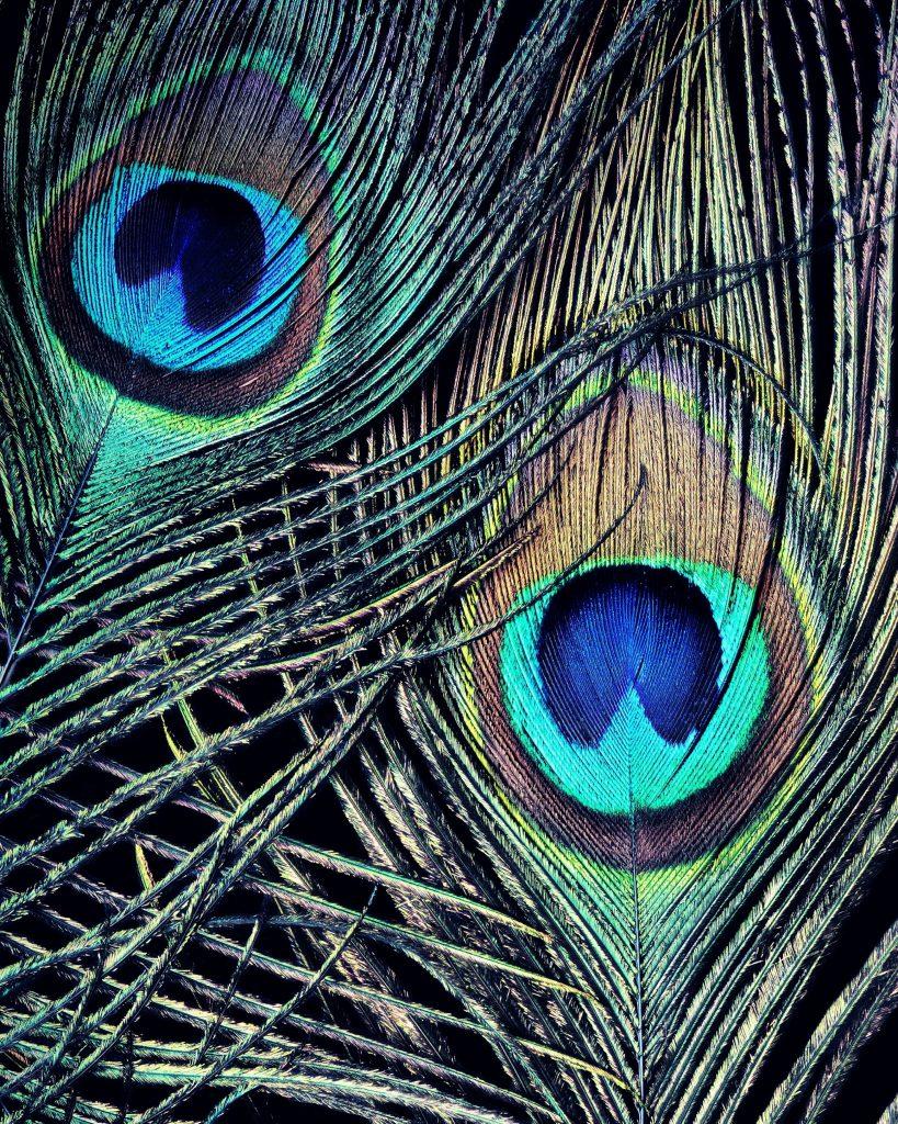 Bird Feather Artworks Nadia Culph
