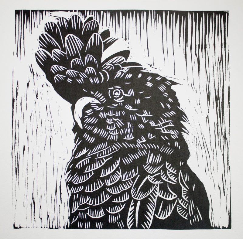 Cockatoo Australian Birds Artwork