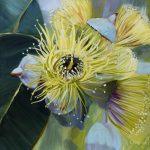 Blooming Woodwardii