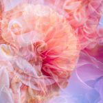 "Dreamy Dahlia's   ""Garden of Love"" series – Ltd Ed Print"