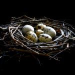 Bird's Nest and Quail Eggs