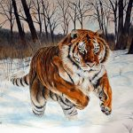 Beautiful tiger in snow